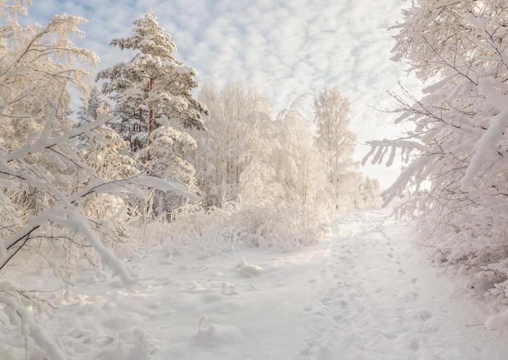 Photo: Vitalii Verevkin
