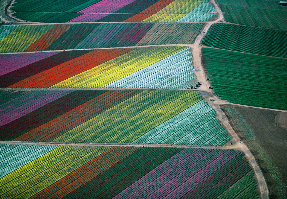 tulip-fields-from-above-holland